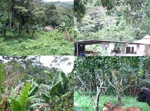 Caprizchka's Farm in Venezuela